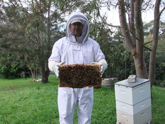 David Oliver extracting honey